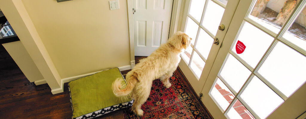 home security for pets