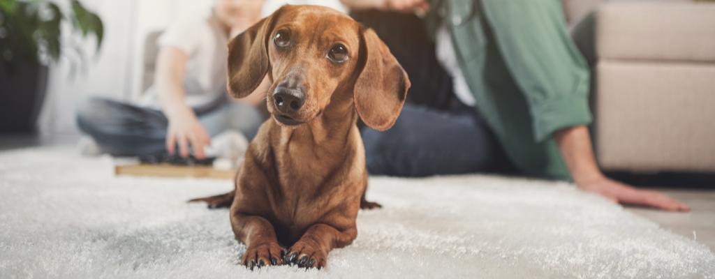 Sistemas para proteger tus mascotas y tu hogar