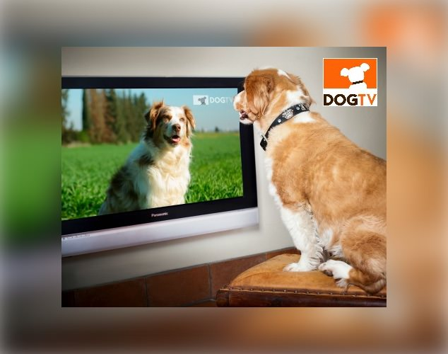 Dog TV Hero